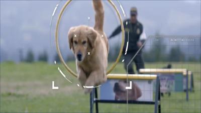 Capacitación para promover el cuidado de los caninos que prestan servicios de vigilancia y seguridad privada - A cargo de la Escuela de Guías y Adiestramiento Canino de la Policía Nacional